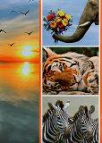 Fotoalbum 200 foto - Divoká zvířata -