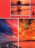 Fotoalbum DPH-4636 Timing 2 růžové 36 foto -