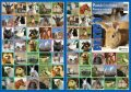 Pexeso - Domácí zvířata - Almatyne