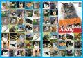 Pexeso - Kočky - Almatyne