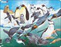 Puzzle MAXI - Tučňáci/50 dílků - Larsen