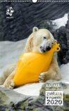 Nástěnný kalendář Zoo Praha 2020 - Zvířata v pohodě - Zoologická zahrada v Praze